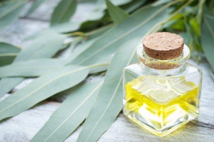 Eukalyptusöl als Erkältungsmedizin