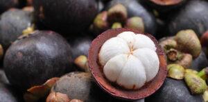 Mangostin – der leckere Immunbooster